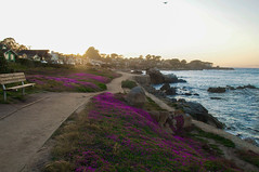 Sunset Magic (kirstenscamera) Tags: ocean california ca pink flowers houses sunset nature bench outdoors spring nikon rocks path may montereybay trail pacificgrove 2016
