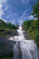 _DSC4782 (rosarioc62) Tags: munnar hill station india landscapes stream hills waterfalls bridge