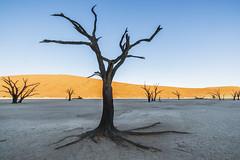 Sossus vlei - Namibia (wietsej) Tags: park tree dead desert sony namibia 1635 vlei sossus a900 namibnaukluft sal1635z