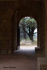 (Eleanna Kounoupa) Tags: trees mediterranean greece rodos stoa traditionalarchitecture   filerimos dodecaneseislands