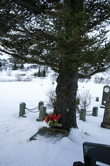 Red flowers on a graveyard, Tingvalla (LimeWave Photo) Tags: park travel flowers winter red sky church nature beautiful graveyard landscape island iceland scenery view national thingvellir þingvellir goldencircle tingvalla snowclad limewave