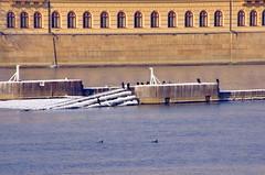 Prague, des cormorans sur la rivire 1 (paspog) Tags: ice river prague rivire fluss eis rpubliquetchque glace frozenriver cormorans riviregele
