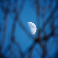 moon through a tree (peet-astn) Tags: moon tree dusk luna albero