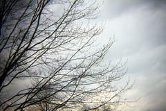 61-2012 holgaesque (saralonde) Tags: holgaesque 612012