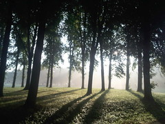 Early morning sun (Rona's whereabouts) Tags: park wood light shadow sun tree nature sunrise landscape scenery bremen brgerpark parkhotel
