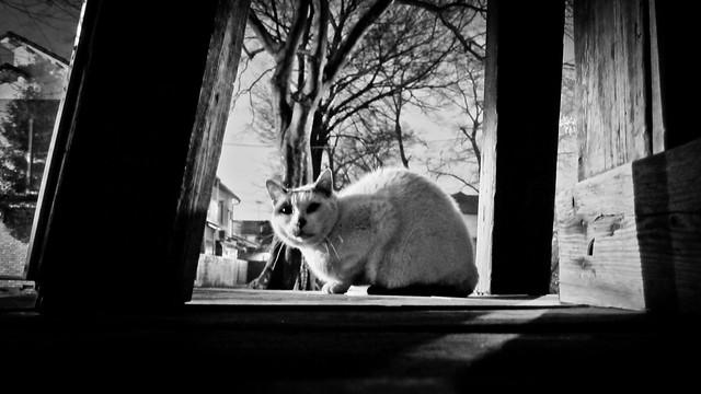 Today's Cat@2012-03-06