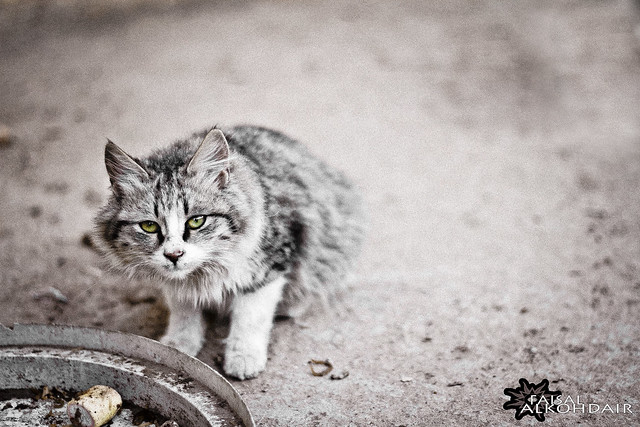 Dirty Cat