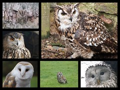 World Owl Trust (GillWilson) Tags: worldowltrust