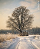 A winter's nest / Detail (Carlo Milani) Tags: texture landscape artistic campagna naturepoetry brughiera