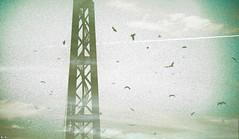 Ponte Luís I (marismm) Tags: bridge portugal birds ponte porto luis olymus i epl1