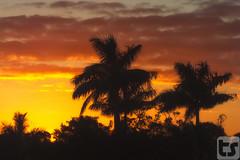 No Deficit Of Wonder (Theodore A. Stark) Tags: winter tree silhouette clouds canon outdoors florida wildlife palmtree 7d everglades vegetation evergladesnationalpark subtropical theodore theodoreastark tedstark tstarkcom flgps