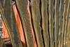 "L'alchimiste & ""l'esprit de sel"" (acidum salis) by thierry Ehrmann DDC_2402 (Abode of Chaos) Tags: sculpture france mystery museum painting jung symbol crane contemporaryart secret apocalypse greatwork ddc sanctuary jollyroger alchemy prophecy 999 vanitas alchimia alchemist paulocoelho vanité magnumopus graal gnosticism dondedieu materiaprima nicolasflamel artprice salamanderspirit organmuseum saintromainaumontdor andrébreton demeureduchaos thierryehrmann alkimia finis têtedemort alchemical rubedo abodeofchaos loeuvreaunoir grandoeuvre alchemicalsymbol citrinitas fulcanelli philosopherstone lespritdesel lespritdelasalamandre corpusjabirianum alchimiespéculative lemystèredescathédrales lesdemeuresphilosophales latourbedesphilosophes spagyrie basilevalentin rosariusphilosophorum historyofalchemy nucleartransmutation khemeia voiesèche voiehumide liberparagranum artroyal donumdei chaosrepublic h3ocl solutionpure acidechlorhydrique grandfumant acidumsalis"