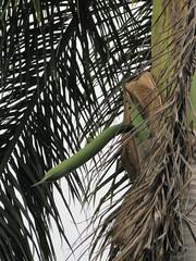 Hmm ... (wallygrom) Tags: mexico yucatan playadelcarmen palm palmtree mayanriviera quintanaroo playacar flowershoot