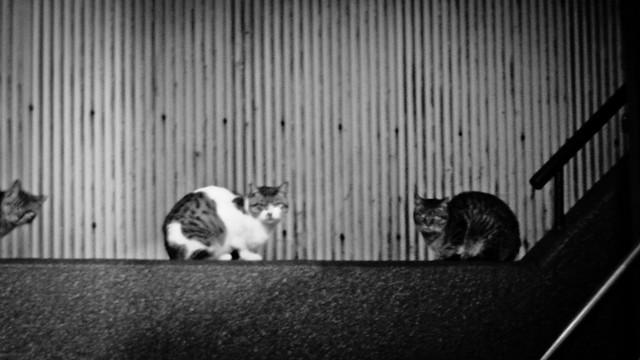 Today's Cat@2012-02-15