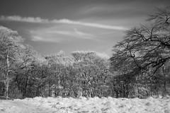 Infrared Heaven (Alexis Peace Hall) Tags: longexposure trees blackandwhite blur clouds digital forest landscape scotland edinburgh cityscape infrared dslr blackfordhill 30secondexposure slowshutterspeed canon70200mm canon7d