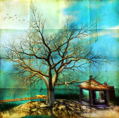 Quelque part sur Terre...SLienne... (~Alia~) Tags: winter light sky tree bird texture birds clouds lights sl ciel secondlife arbre textured oiseaux alia theblackbirds slwindlight qunhua aniatatarynowicz