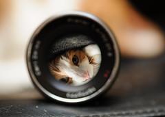 refraction (rampx) Tags: eye zeiss cat lens eyes refraction  tamron  planar daifuku carlzeiss 272e explored planart1450 zf2 planart50mmf14zf2