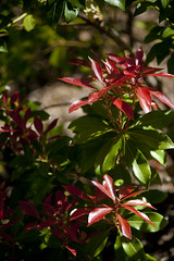 "(""You Got Framed"" photography by Mindy Atkins) Tags: red bush shrub shrubs shrubbery natureoutdoors redbush redbloom redshrub"