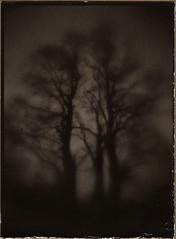 threetree (NooFZz) Tags: bw tree landscape monocle 9x12 surrreal photographicpaper paperpositive bulldog4x5
