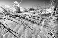 Sandy Shadows (coral.bricknell) Tags: sun grass clouds coast sand shadows footprints ripples
