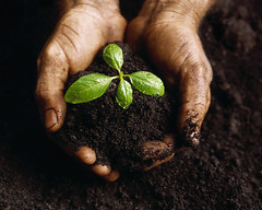 CB055265 (mkellerbr2) Tags: people plants brown color photography gardeners 1 holding hands farmers colorphotography imagens dirty growth soil dirt agriculture fertility seedlings naturalworld planting humanbodyparts closeupview photographicstudies agriculturalworkers darkbrown poticas