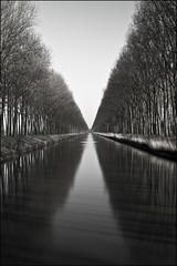 Schipdonkkanaal, Damme, Belgium (sven483) Tags: trees reflection water canal belgium populier damme schipdonkkanaal mygearandme mygearandmepremium mygearandmebronze mygearandmesilver mygearandmegold mygearandmeplatinum