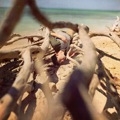 Oceans Tide Me Home (Cameron Bushong) Tags: ocean wood trees shells texture beach me birds self dead sand gulf branches gulls salt crabs breeze squared 366