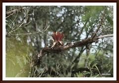 natureza (Mandeandrade) Tags: folhas butterfly galinha natureza paisagem inseto borboleta hibisco araucária pintinhos hibiscoamarelo mandeandrade