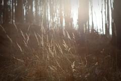 Inner peace (Tease 2 0 1 0) Tags: wood sun nature backlight canon woodland austria sterreich forrest natur gras sonne wald 28135mm gegenlicht gablitz eos5dmkii