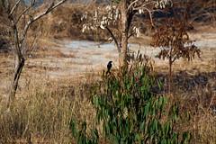 IMG_7011L4 (Sharad Medhavi) Tags: bird canoneod50d birdsandbeesoflakeshorehomes