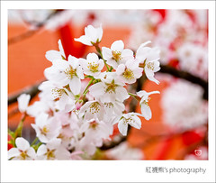 ( ()) Tags: macro 50mm bokeh olympus zuiko e30  alishan      alishannationalforestrecreationarea