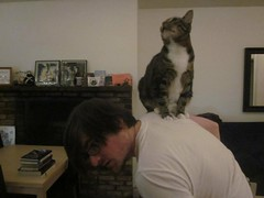 Fry loves sitting on my back/shoulders. Michelle got this shot of him demonstrating his dominance over me (adambox) Tags: mobile kitty philipjfry
