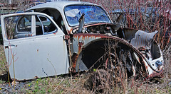 McLean's_0114 (janetliz) Tags: old cars vw bug rusty scrapyard punchbuggy decayed volkswagon tpmg autowreckers mcleans