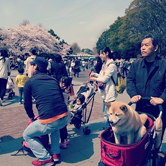 #ueno #tokyo #dog (hiromy) Tags: square nashville squareformat iphoneography instagramapp uploaded:by=instagram