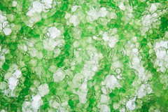 Purslane 10x (TheLostVertex) Tags: plants plant macro green closeup studio leaf weed flash cellular stack cells bellows purslane objective elinchrom 60d microscopeobjective nikon10xobjective