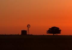 Sunset and silhouettes (MsScorpio52) Tags: sunset orangesky colourfulsky sunsetcolours starkbeauty silhouettewindmillstarktree