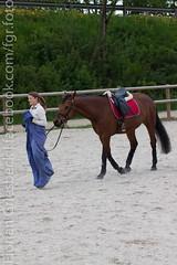 IMG_1969 (florian_1_1_2) Tags: horse funday pferde pferd reiten dressur alzinger gelassenheit reitanlage gemling reitanlagealzinger