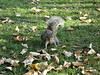 //not so friendly squirrel// (zanottiarianna) Tags: park green london squirrel regents greass