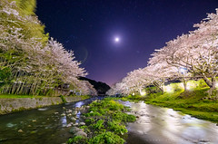 Moonlight and riverside cherry trees [Explore] (-TommyTsutsui- [nextBlessing]) Tags: longexposure pink light sky moon tree green nature japan night river cherry landscape star 1 spring nikon purple blossom scenic explore  sakura  izu  410 someiyoshino      matsuzaki starlit  sigma1020  onsalegettyimages