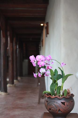 Chiang Mai 183
