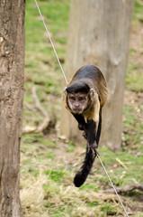 2016.03.23 - 1221.52 - NIKON D7000 - 88 (bigwhitehobbit) Tags: 2016 edinburghzoo family march monkey