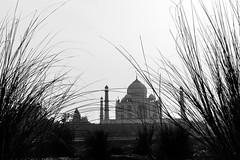 Between the Bushes | Taj mahal, Agra. (vjisin) Tags: sky blackandwhite cloud india plant tree love monochrome architecture wonder asia outdoor tajmahal agra marble bushes shahjahan mughal whitemarble mughalarchitecture incredibleindia mumtaj wonderofworld mehtabbagh
