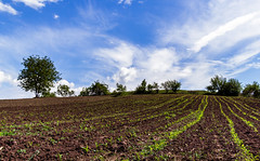 blajini natura-1900 (maritoieugeniu) Tags: flowers blue trees sky green fauna clouds landscape landscapes earth land agriculture cloudscapes moldova skyporn radeni