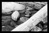 Wood&Rocks (gullihanne) Tags: bw monochrome norway contrast norge blackwhite rocks norwegen tre kontrast stein nordnorge fjære troms sorthvitt northnorway svartoghvit svarthvit salangen