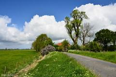 Frhling in der Zeteler Marsch / Landkreis Friesland (berndwhv) Tags: landscape deutschland feld himmel wolken landschaft bume weg landschap frhling norddeutschland niedersachsen zetel ebene grasland landstrase landkreisfriesland zetelermarsch