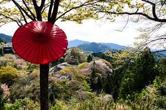 Red umbrella (p.fabian) Tags: japan umbrella jp  nara paraguas  japn sonnenschirm  naraken yoshinogun