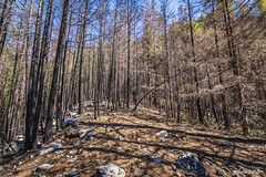 Upper Skagit Complex Fire 2015 (johnwporter) Tags: mountains nationalpark hiking mountainclimbing wideangle cascades mountaineering wilderness pnw 山 scramble northcascades northcascadesnationalpark peakbagging wideanglelens 國家公園 爬山 徒步 登山 northcascadeshighway 爬行 廣角 荒野 davispeak 廣角鏡 rosslakenationalrecreationarea stephenmatherwilderness tokinaaf1116mmf28 atx116prodx 戴維斯峯 northwestisbest 羅斯湖國家遊樂區 北喀斯喀特山脈 北喀斯喀特山脈公路 北喀斯喀特山脈國家公園 upperleftusa 太平洋西北部 喀斯喀特山脈 美國左上角 西北部最好 捕峯 史蒂芬馬瑟荒野
