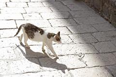 light & shadow (anvaliri) Tags: light shadow luz cat canon sombra gato dubrovnik 1585