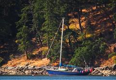 island living (uteart) Tags: sailboat shore forest westcoast sunlit firtrees uteart saltspringisland canada