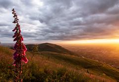 IMG_8372 (nick.gloaguen) Tags: england west sunrise canon eos golden walk hills tokina hour 7d malvern worcestershire 24105mm 1116mm